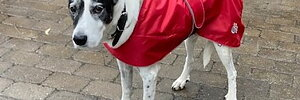 Snyggt hundtäcke vattenavvisande tyg som skyddar bra!