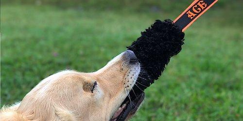 KAMPLEKSAK Populär leksak med namn för alla hundar!