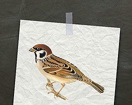 Bird school