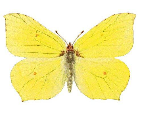 École de Papillons