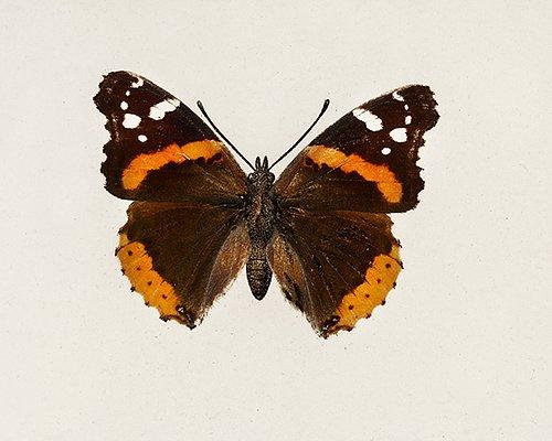 Schmetterling Schule