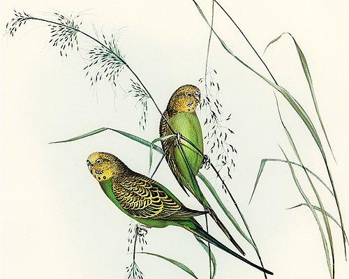 Vogelschule