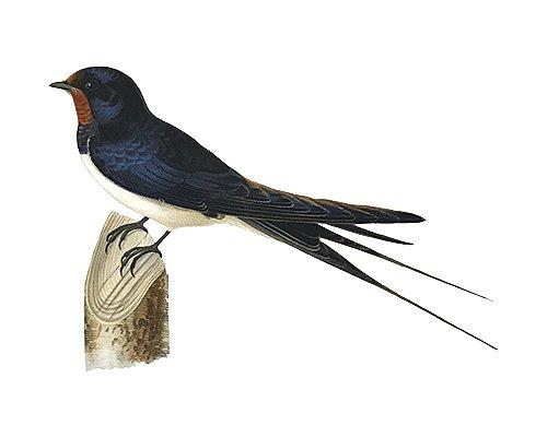 L'école des oiseaux
