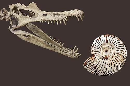 Fossils Genuine fossils from: - Sharks- Dinosaurs - Ammonites ....