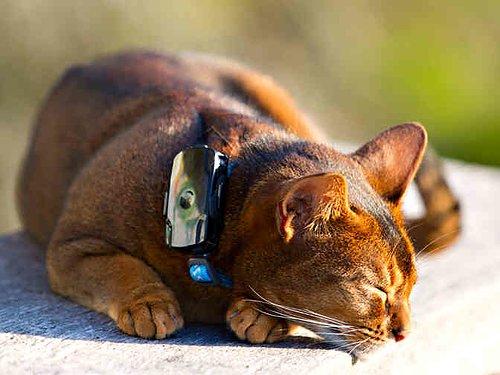 Minsta GPS halsbandet för katt