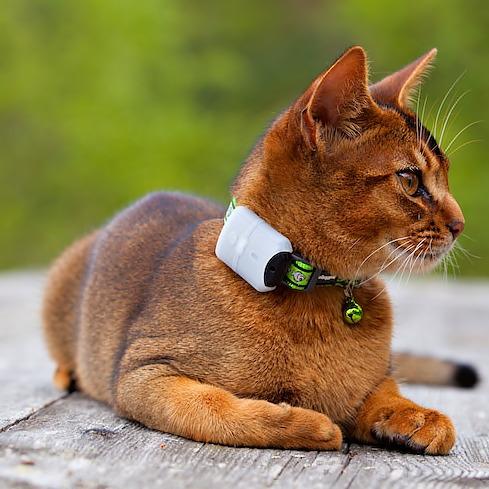 Håll koll på katten i sommar! m ed hjälp av pejl