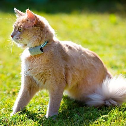 Direkt till våra Pejlare för katt sändarens vikt 4gram