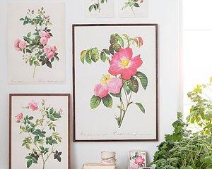 Vackra växtplanscher i nytryck