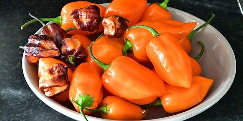 Dags att börja så chili Chili tar lång tid på sig att utvecklas. För tidig skörd - så nu! Vi har massor av spännande sorter.