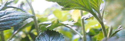 Kickstarta sommarens odling med ett nytt växthus!