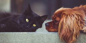 PETS  Petcom