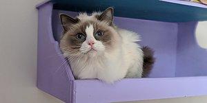 Skänk Vårddygn De hemlösa katterna behöver din hjälp!