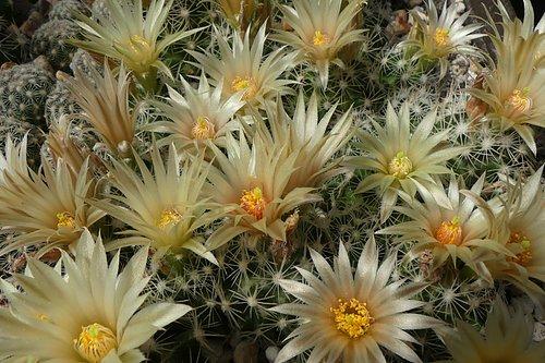 Free flowering plants