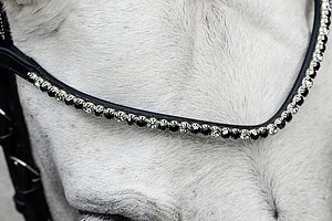 BROWBANDS  SHOP NOW