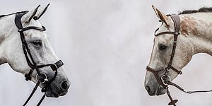 THE WORLD'S BEST BRIDLES Your horse deserves it SEE ALL BRIDLES