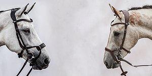VÄRLDENS BÄSTA TRÄNS Din häst förtjänar det SE ALLA TRÄNS