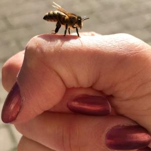 Bli En Planetskötare Och Insektsvän Rädda våra bin och andra pollinerande insekter! Läs mer här vad du kan göra för att bli en planetskötare.