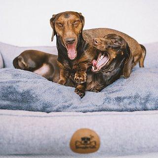 Alla förtjänar att sova gott  Se våra hundbäddar