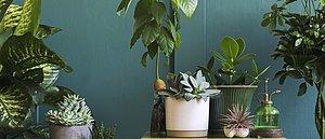 Växter, blommor & träd  Visa produkter