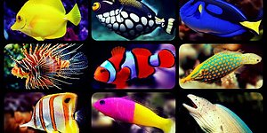 Levande fisk mm
