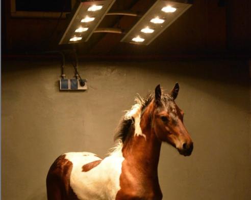 Skäm bort din häst