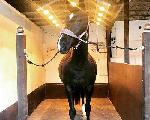 Skäm bort din häst med ett solarium 2-års garanti & FRI frakt