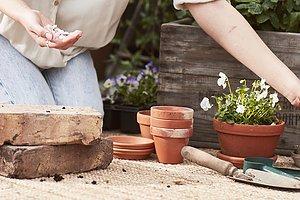 Drivhus  Fortsette å vokse i høst!