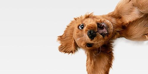 Valpkurs  För din hunds bästa!
