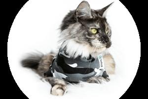 Återhämtningsbody För hund & katt