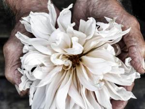 PRINTS  Årstidensbästa´s magiska blommor på print