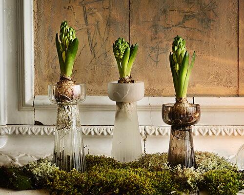 Vas till hyacinter