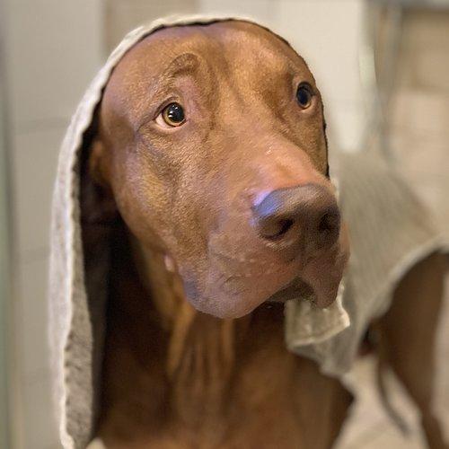 Dags för ett bad?
