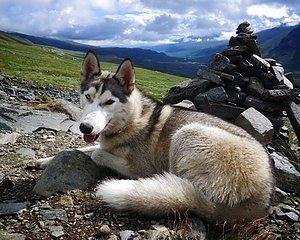 Halsband och koppel för hundäventyr