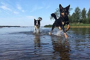 Godis Godis Godis 100% naturligt - inga konstigheter Vilken är din hunds favorit?