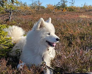 Vårens nyhet Hundvård