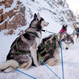 Selar från Howling Dog Alaska finns i butik nu! Superfina och med väldigt bra kvalité Bild: howlingdogalaska.com